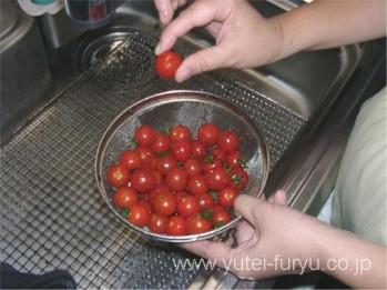 家庭菜園で採れたトマト